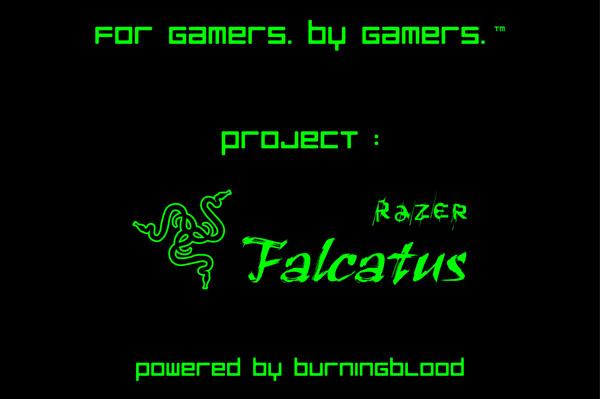 Falcatus3
